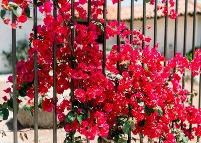 Flowers-400x284